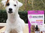 Looking for Pet CBD Solutions? Bundle Up!